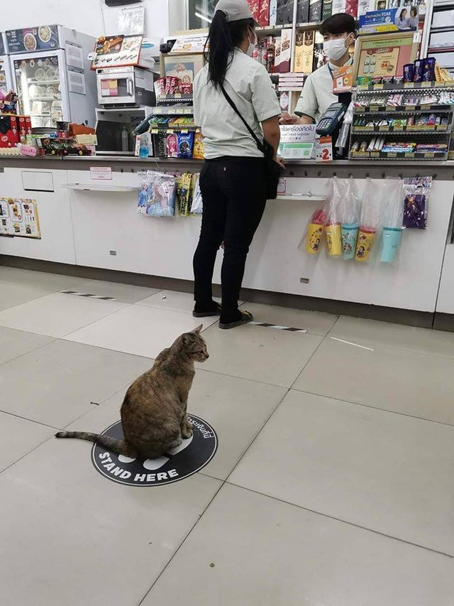 cat in line