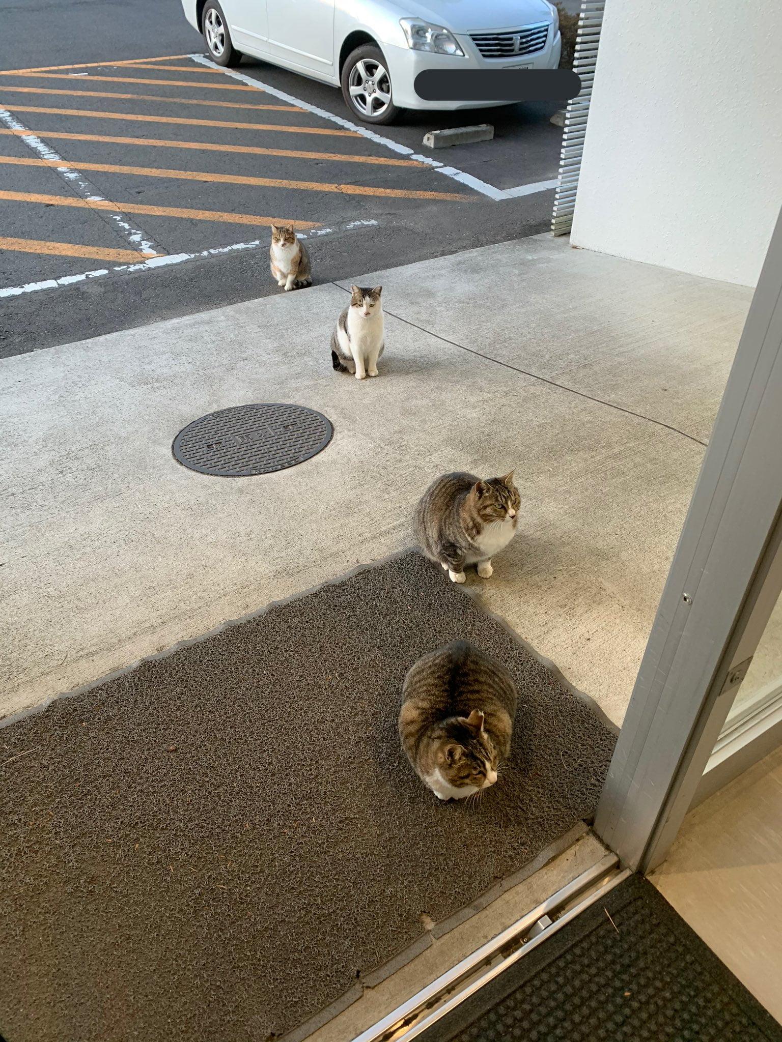 cats social distancing