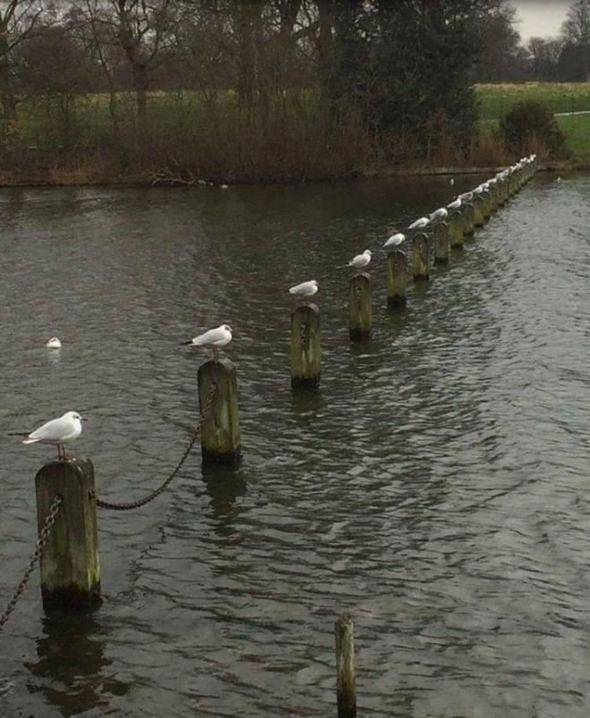 birds social distancing
