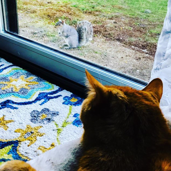 cat squirrel social distancing