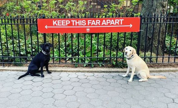 dogs social distancing