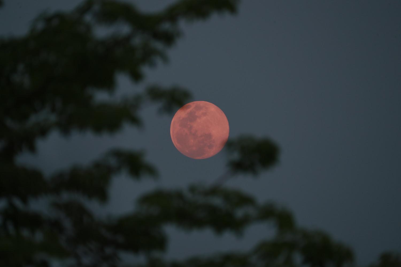 Pink strawberry moon rising in Myanmar